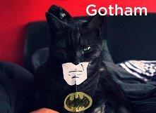Gdyby Koty były fontami, fa...