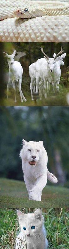 zwierzaki albinosy