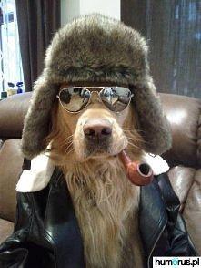 Gangsta dog