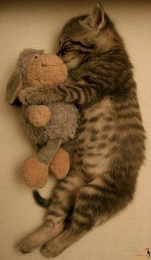 Kto chce takiego kotka ?  Zapraszam również do tablicy z biżuterią, każda kobieta znajdzie tutaj coś dla siebie :)