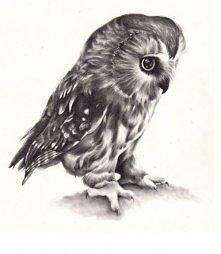 owl ;)