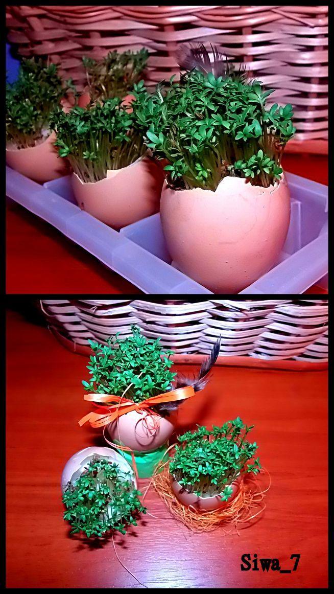 świąteczne jajka nieco inaczej :D