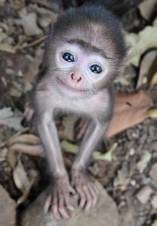 mała małpeczka
