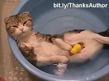 Kocie szczęśie <3