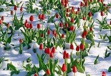 czyżby wiosna?