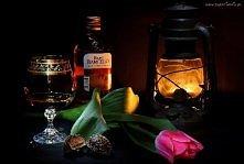 Kompozycja Alkohol, Lampa i Tulipan