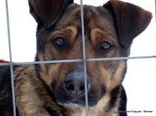 Czarek - wesoły, średni psiak do adopcji? Zoomia.pl / Kliknij i zobacz szczegóły