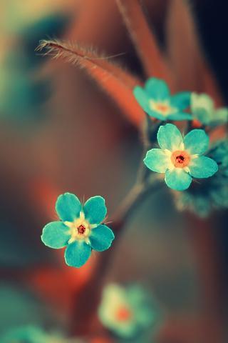 Świetnie kwiaty, a jaki cudny kolor..