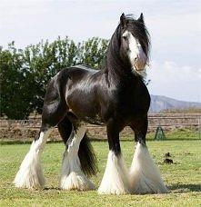 to dopiero koń!
