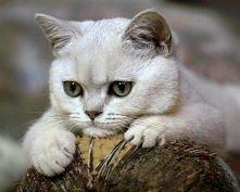 Zamyślony kotek...