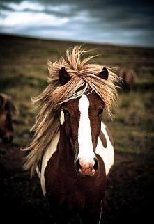 Konie kochają pastwiska :)