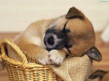 bardzo śpiący