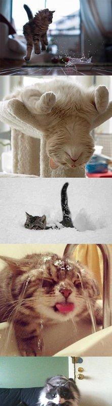 Śmieszne koty :D