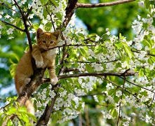 Koty lubią maj :)ko