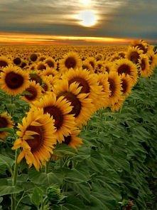 pole słoneczne