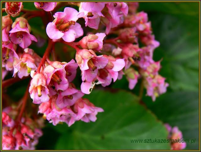 więcej kwiatów -kliknij w zdjęcie