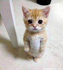 ja nic nie zrobiłem.. i jak tu takiego nie kochać?! :)