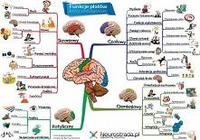 jak działa mózg