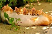 Śmieszne koty :)