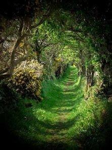 "Ballynoe, Co Down, Irlandia ""."