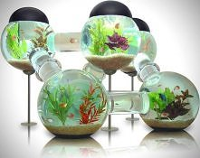 Labyrinth Fish Tank Aquarium