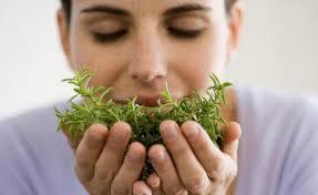Jakie zioła pasują do drobiu? Kliknij w zdjęcie.