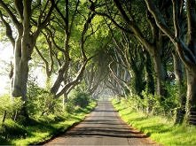 Dark Hedges, County Antrim, Irlandia Północna
