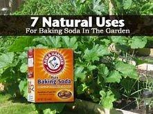 1. nietoksycznym środek grzybobójczy  Zmieszaj 4 łyżeczki sody oczyszczonej w 4 litrach wody. Użyj na róże, a także na winogron i winorośli, gdy owoce zaczynają się pojawiać. 2....