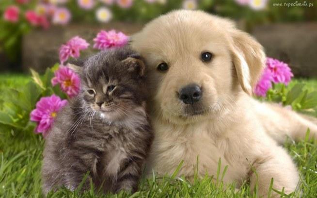 Psy , Koty , Starzy , Znajomi
