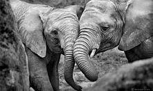 słonie ♥.♥