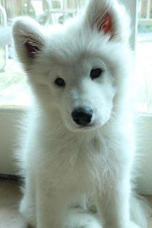 .snowy doggie.