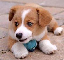 ❤Dog images, dog animations, dog quotes, dog training tips, funny dogs, dog a...
