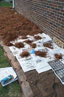 Gazety zapobiegają wyrastaniu chwastów na rabatach, a rozkładają się po około 18 miesiącach