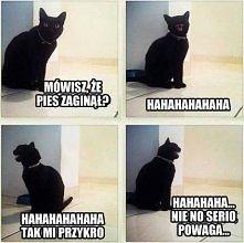 koty są mega ♥ ♥ xd
