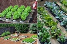 Pomysłowy warzywniak