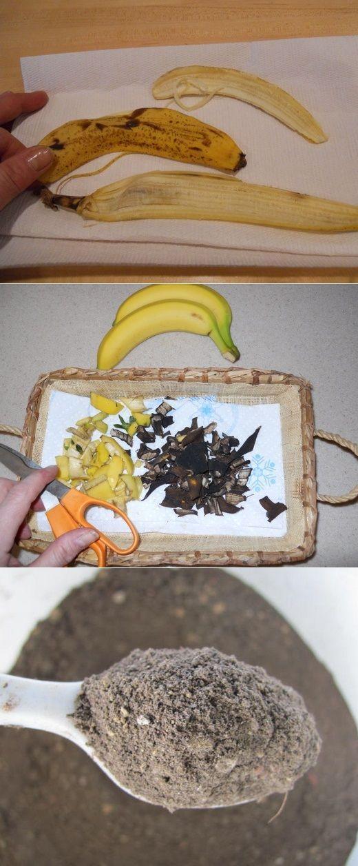 Suszone skórki banana jako nawóz do Roślin