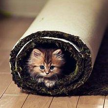 mały słodki kotek