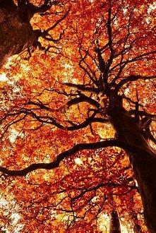 ...jesień...