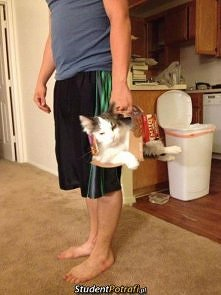 nosidełko z kartonu dla kot...