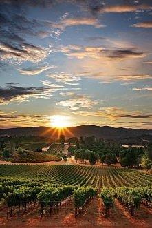 Napa Valley Vineyards,CA