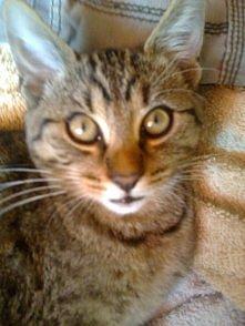 czy ten kot nie ma szatana w oczach? :)
