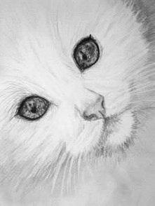 kotek w moim wykonaniu...