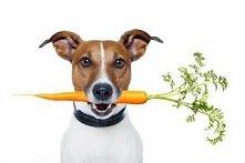 Jak karmić psa? Kliknij w z...