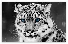 blue eyes *,*