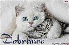 Kto idzie spać temu kolorowych życzą kotki <3  mrauu !