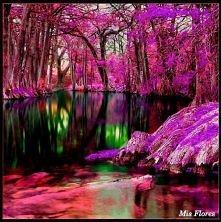 Fioletowy świat