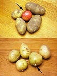 Aby ziemniaki nie zaczęły k...