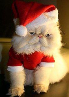 świąteczne zwierzaki