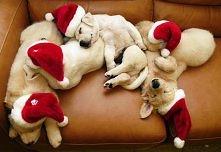 Zwierzaki też czują magię świąt ;)
