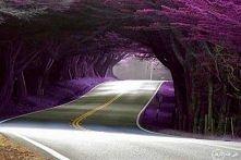 Tunel z drzew w Azerbejdżanie